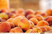Peaches on Farmers Market Stand. Prunus peach. August 2006. Maryland, USA