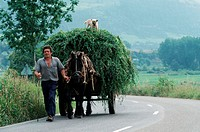 Farmer, with, horse, cart, full, of, hay, dog, standing, on, the, hay, Asturia, Spain, domestic, dog