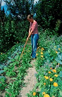 Woman, working, in, famer, garden, Bavaria, Germany, people