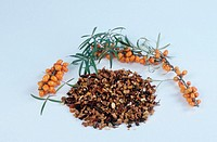 Sea, Buckthorn, branch, with, berries, and, dried, Hippophae, rhamnoides
