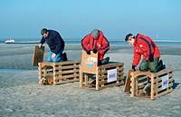 Harbour, Seals, beeing, relased, Netherlands, Phoca, vitulina
