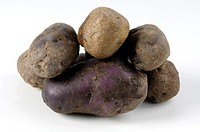 Potatoes, ´Herrmanns, Blaue´, Solanum, tuberosum, indoor