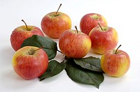 Apples, ´Gerlinde´, Malus, domesticus, indoor