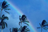 Hawaii, Rainbow arching over palm trees in blue sky