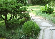 Landscaping, pathway through yard