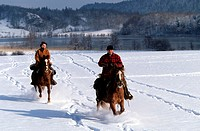 France, Jura (39), region of the Quatre Lacs, equestrian tourism in winter