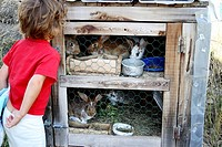5 year old little girl looking at rabbits.