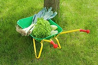 Vegetables in a wheelbarrow (thumbnail)