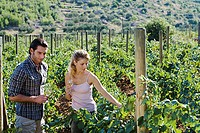 Couple looking at vineyard