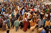 market, person, nanny goats, sheep, cattle, Goulmima, Morocco, Africa, North Africa