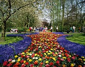 Keukenhof Gardens, Keukenhof, garden, gardens, Lisse, Zuid Holland, South Holland, zuid, south, Holland, Netherlands,