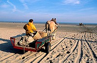 Belgium, West Flanders, the last shrimps fishermen on horses with their carriages on the beach of Oostduinkerke