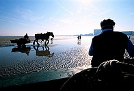 Belgium, West Flanders, shrimps fishermen on horses with their carriages on Oostduinkerke-Bad beach