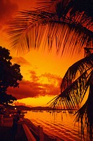 Silhouette of palm trees along the ocean at sunset, St. Thomas, U.S. Virgin Islands