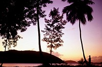 Silhouette of trees at sunset, U.S. Virgin Islands