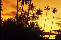 Silhouette of coconut trees, Hawaii, USA