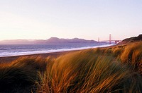 Grass on the beach, Golden Gate Bridge, San Francisco, California, USA