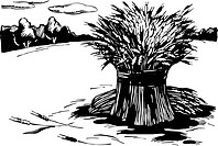 A black and white illustration of bundles of wheat in the field