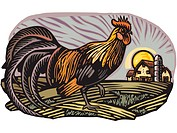 Rooster with barn in the background (thumbnail)