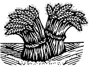 Black and white drawing of bunches of wheat