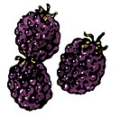 A picture of three blackberries