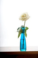 Turquoise glass vase with single white rose on wooden table