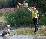 Woman, and, Labrador, Retriever, doing, dummy, training