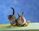 Chick, kitten, and, rabbit