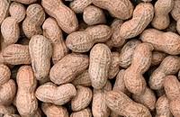 Peanuts, Arachis, hypogaea