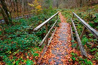 Small wooden bridge in Autumn