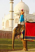 Low angle view of a young man standing on an elephant in front of a mausoleum, Taj Mahal, Agra, Uttar Pradesh, India