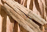 High angle view of Cinnamons sticks
