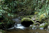 Creek in Ecuadorian forest