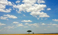 Two trees on the Serengeti plains of Masai Mara Game Reserve Park, Kenya