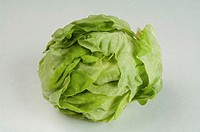 Butter lettuce on a studio background