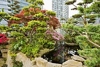 Dwarf trees & shrubs around koi pond in urban rooftop garden [Rhododendron cv.; Acer palmatum cv.; Pinus sp.]. Patterson, Vancouver, British Columbia....