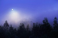Mist in the evening