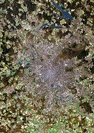 Moscow, satellite image  North is at top  Vegetation is brown and green, water is blue and urbanised areas are grey and pink  Moscow is the capital ci...