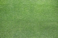 Lawns, close-up, ´English lawn´, meadow, grass, golf-lawns, lawn-surface, symbol, mowed, shortly, dense, clean, been in the habit of, regularity, conc...