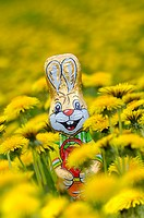 Dandelion-meadow, Schokoosterhase, series, meadow, dandelion, blooms, Easter bunny, symbol, Easter, chocolate-hare, chocolate, packed, packs, sweet, c...