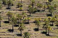 Spain, Canaries, island La Gomera, read Toscas, palm-grove,