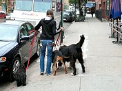 USA, New York city woman dogs gas-y-marriages Dogsitter, back-opinion, models release, America, city, Manhattan, no people, animals, occupation, pets,...