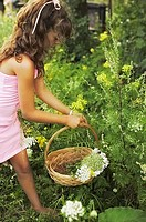 Pre-teen girl picking flowers