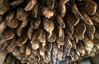 Cured hams, Jabugo. Huelva province, Andalusia, Spain
