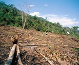 Deforestation in the rain forest. Amazon basin. Deforestation Peru
