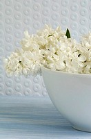 White syringa in bowl, close-up