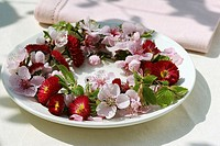 Wreath of Bellis and peach blossom