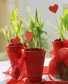 Lilies-of-the-valley in red pots with hearts