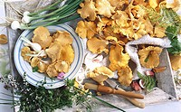 Chanterelles with spring onions and herbs