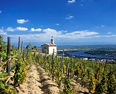 La Chapelle vineyard in Tain-l'Hermitage, Rhone